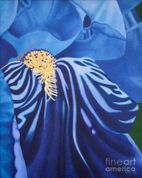Tags: iris paintings , flower paintings , iris canvas prints , flower