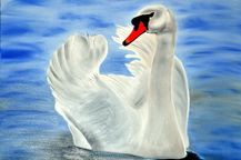 Male Swan Painting by Bridgette Symanski  Male Swan Fine Art Prints