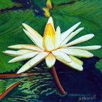 Water Lily Painting by Sandi Howell  Water Lily Fine Art Prints and