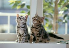 Kittens  Cats Photo (5979907)  Fanpop fanclubs