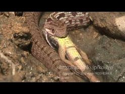 ???????????????? The snake eats a