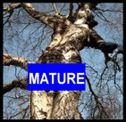 Mature Nudity Frontal Naked Woman Tree Giclée Printed Art Sew on 3 x