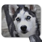 Siberian Husky Mouse Pads and Siberian Husky Mousepad Designs