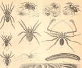 Wood Mites Insects http://www etsy com/listing/128203158/1896original