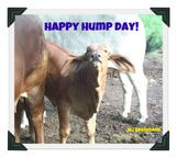 HaPPy HumP Day! | Humpin' it in the Boonies