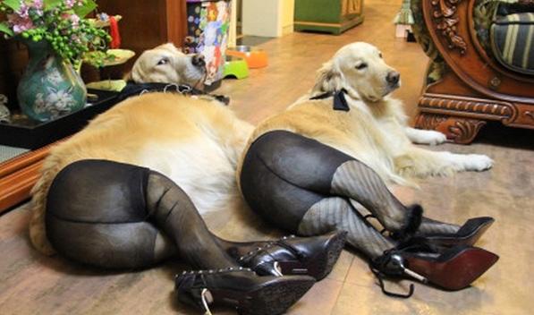 Stockings Compilation Doggy Style 1