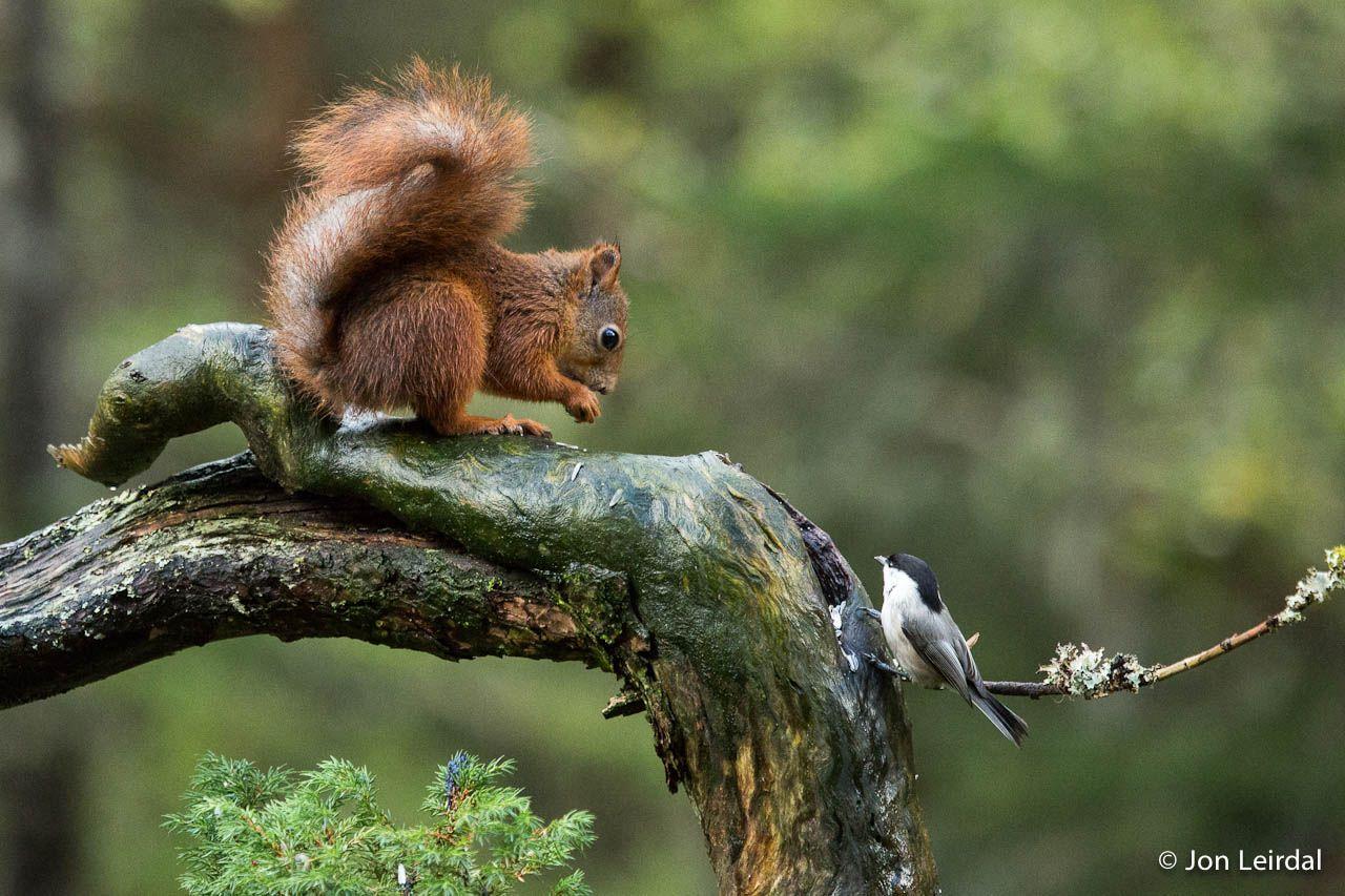 Littlesquirrel Net