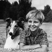 1236125337678 Jpg Original Caption Tommy Rettig With Lassie Filed 6 14