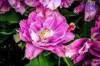 Flower Edwards  Email, direcci�n, n�mero de tel�fono, �todo!