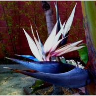 Shannon's bird of paradise | creative genius