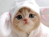 Cabbit | Bunny cats | Pinterest
