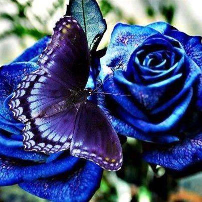 Annett A Blueness