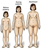showing development: before puberty, during puberty, and adulthood