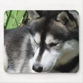 Siberian Husky Profile Mouse Pad at Zazzle.ca