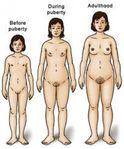 of a girl's body before puberty, during puberty and at adulthood