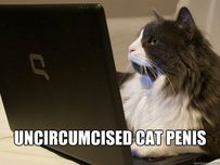 uncircumcised cat penis  uncircumcised cat penis cat penis