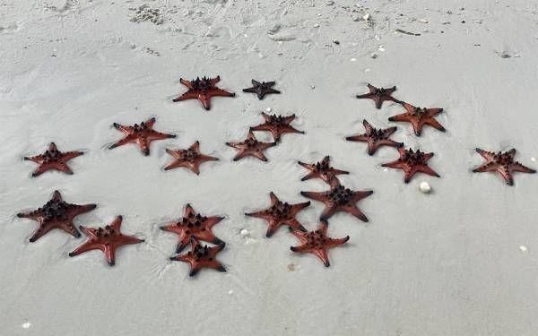Sao biển tại Rạch Vẹm có hình dáng và màu sắc đẹp lạ.