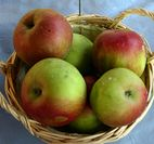 Idared apple  Recipes Wiki