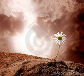 Daisy Royalty Free Stock Image  Image: 20966446