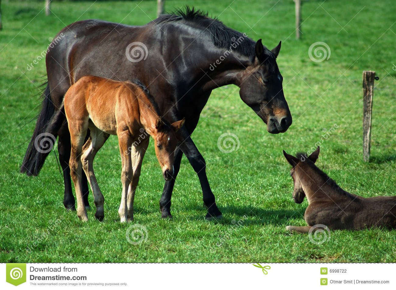 Foals Mother