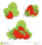 sweet strawberries on a white background stock images image