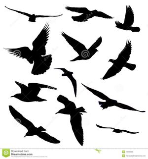 twelve birds fly action silhouette tanatat dreamstime com