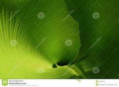 Young Leaf Royalty Free Stock Images  Image: 13803479