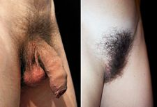 File:Male and Female Pubic Hair jpg  Wikipedia, the free encyclopedia