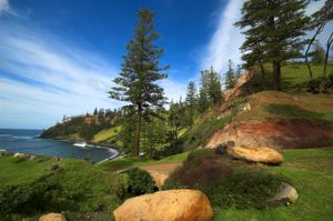 File:Norfolk-Island-Pines jpg - Wikipedia, the free encyclopedia