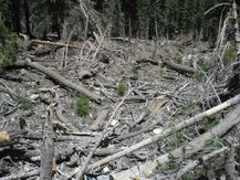 File:Spring Mountains Destruction.JPG  Wikipedia, the free