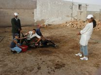castration Morocco jpg