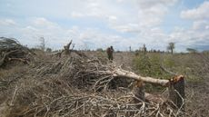 File:Madagascar spiny forest destruction 001 jpg  Wikipedia, the free