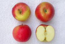 Archivo:Idared pomme.jpg  Wikipedia, la enciclopedia libre