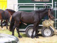 horse erection