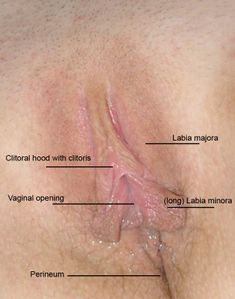 File:Female long labia jpg - Wikimedia Commons