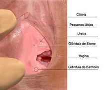 La eyaculaci�n femenina se refiere a la expulsi�n de una cantidad
