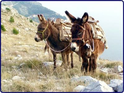 Donkey Riding Videos