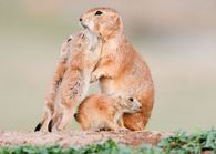 "Prairie dogs loving on mom. ""God could not be everywhere and"