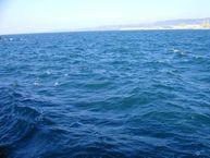 """non dimentichi il mare, è una grande risorsa ambientale""""  Meteo Web"""