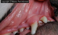 The first image is of the normal mucous membranes (gums) of the mouth