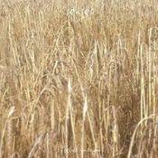 Fields Unsown by SENSES album cover