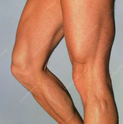 Are leg muscles attractive to guys?