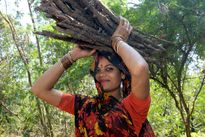 Woman carrying firewood, India  Stock Image P980/0163  enlarged