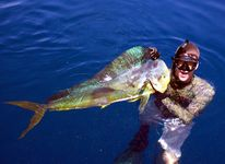 pole spear wahoo and 28lb mahimahi spearblog  Spear � Photo, Picture
