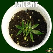 jailbaitweedthcfinder jpg on blog jailbait no  48 size all