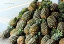 Celebrate the Sweet Pinya (Pineapple) Festival in Laguna | Travel to