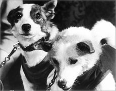 1960 belka and strelka a couple of stray mutts impressed into the