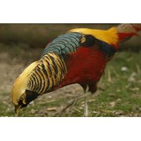 Birds of Paradise Experience at Paradise Wildlife Park for One Special Offer