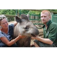 2 for 1 Tickle a Tapir! Special Offer