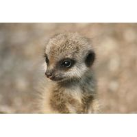 Meet The Animals at Bristol Zoo Gardens for One